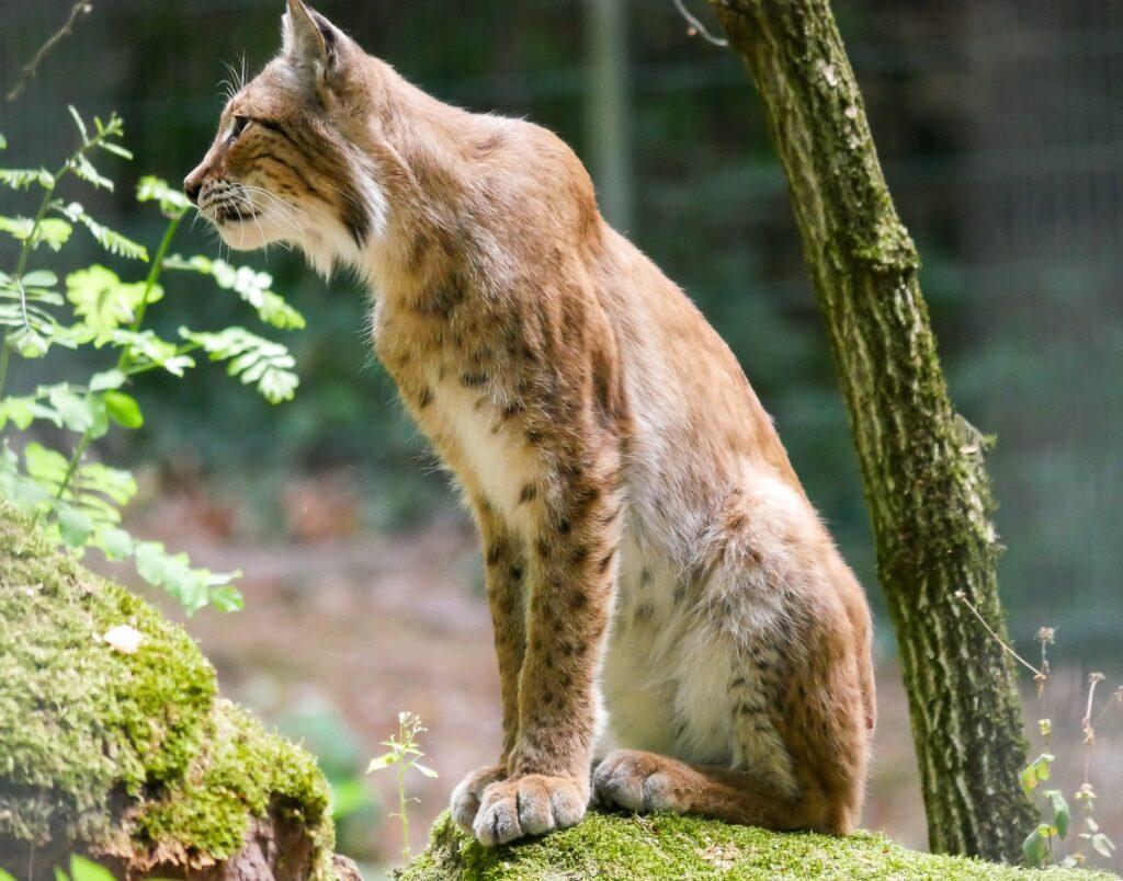 Estudio de afección a la red Natura 2000